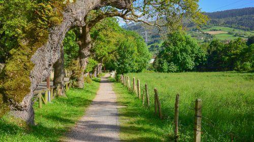 The green path of the Peña Francia River